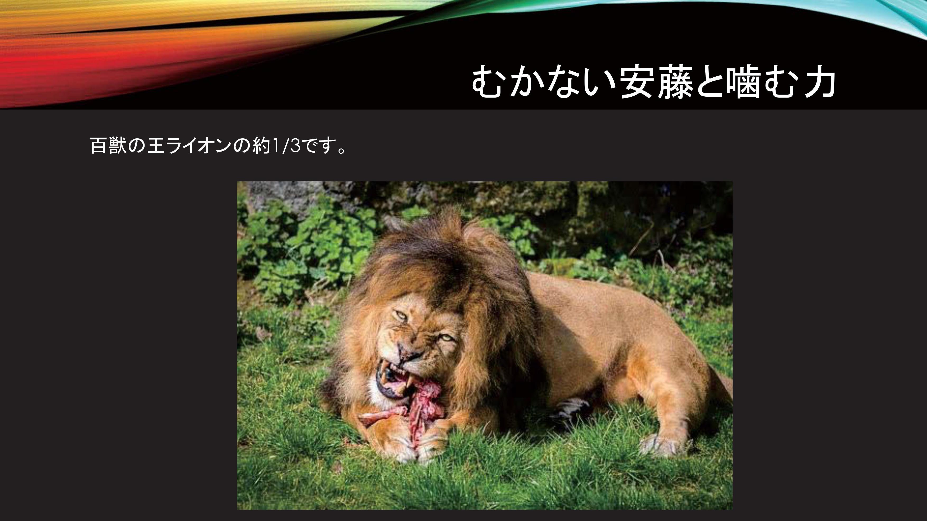 mukanaiando_lion.jpg